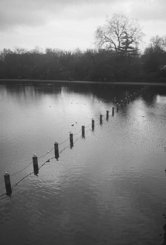 Birds Hyde Park